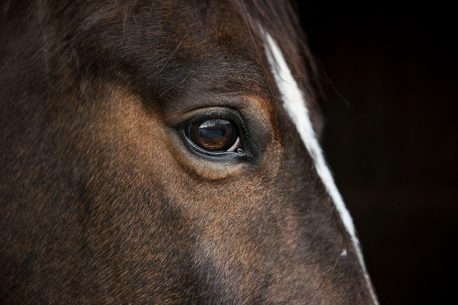 Animal Portraits: The Study of a Horse 7